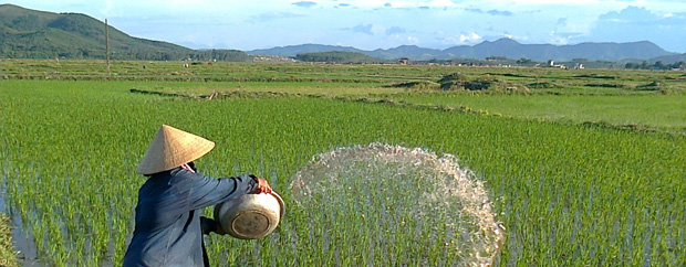 Farmer on rice field